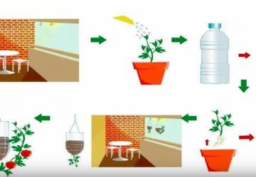 Faites pousser des tomates avec une simple bouteille de plastique, incroyable !