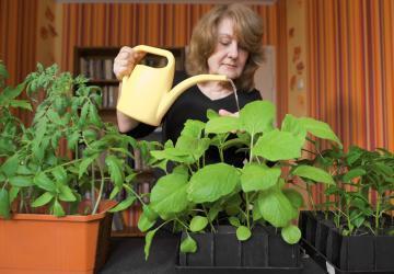 En arrosant la terre avec sa boisson préférée, elle a vu sa plante grossir de 60% en 10 jours!