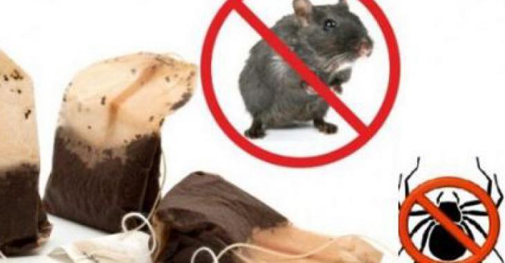 Utilisez un sachet de cette tisane et vous ne verrez plus jamais d'araignées ou de souris!