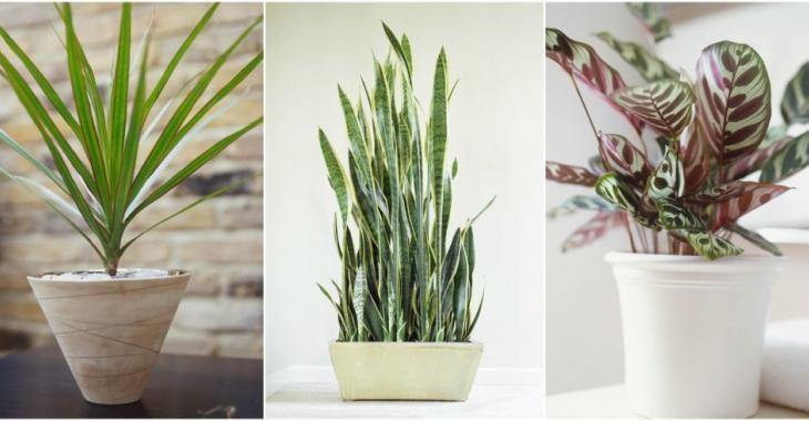 Elle a découvert que ces variétés de plantes n'ont pas besoin de lumière pour vivre...