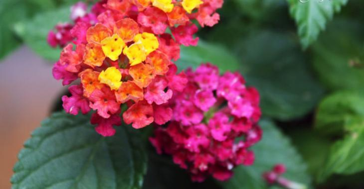 Les 8 plus belles fleurs de jardin qui demandent peu d ...