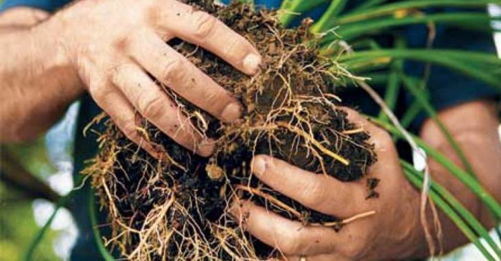 Voici la bonne technique pour diviser vos plantes vivaces envahissantes