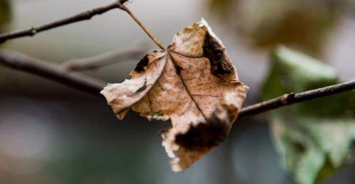 Ramassez-vous vos feuilles mortes à l'automne?