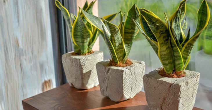 Top 5 des plantes d'intérieur qui peuvent purifier l'air de votre maison