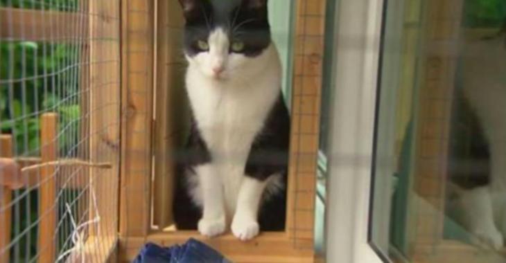 Découvrez les «catios», les patios réservés aux chats!