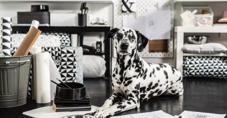 Ikea agrandit sa collection d'accessoires et de mobilier pour animaux de compagnie