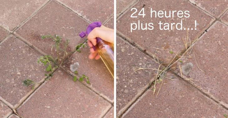 Préparez un désherbant naturel en seulement 5 minutes qui détruira les mauvaises herbes en 24 h!