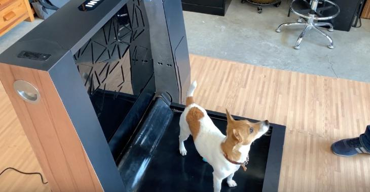 Une entreprise met au point des toilettes intérieures intelligentes pour chiens