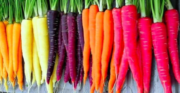 Les carottes arc-en-ciel aux couleurs vives sont la nouvelle tendance  jardinage