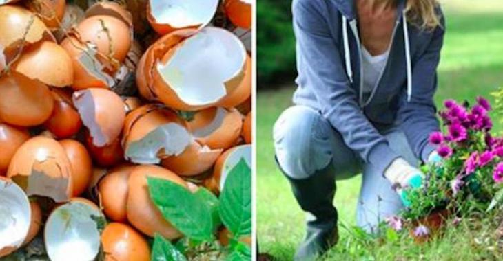 Ne jetez plus vos coquilles d'oeufs! Voici 8 façons de les utiliser!