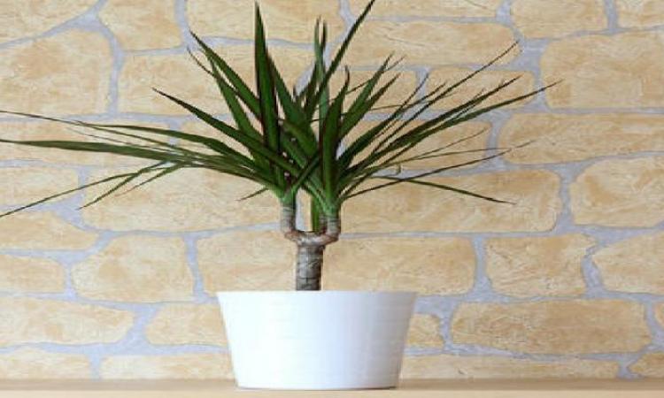 10 Plantes Essentielles Pour Purifier L'Air De Votre Maison - Les
