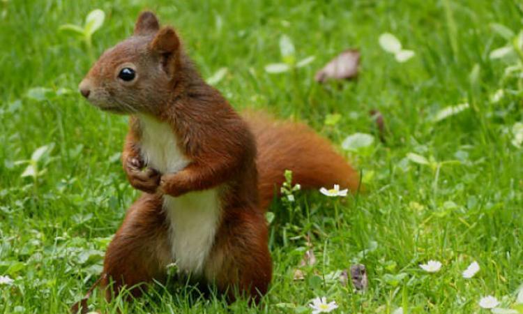 Éloignez les écureuils de votre potager sans leur faire de mal grâce à ces brillantes astuces...